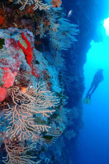 scuba diving in Split area - Venus