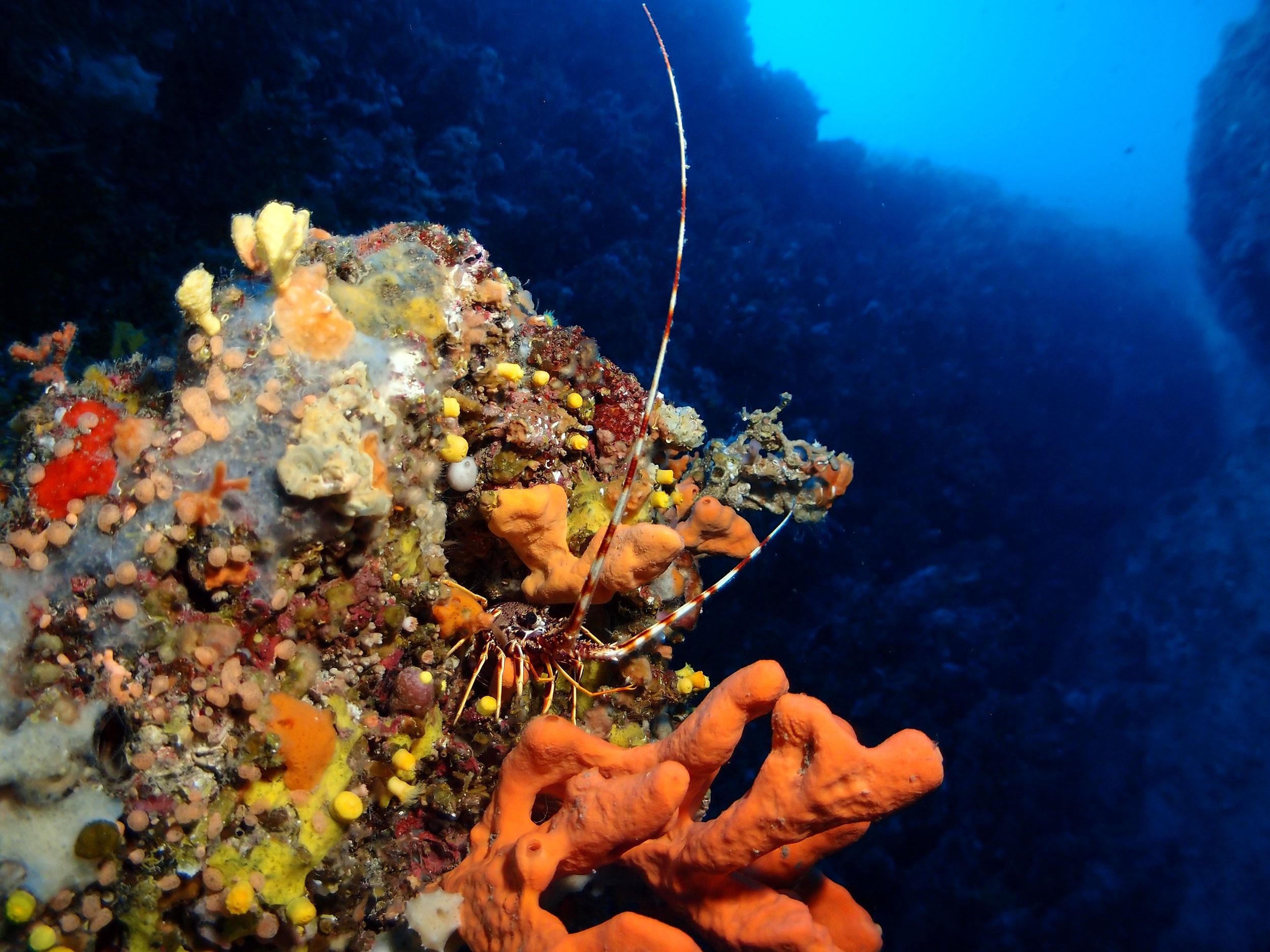 Scuba-diving-in-Split-Slika-2