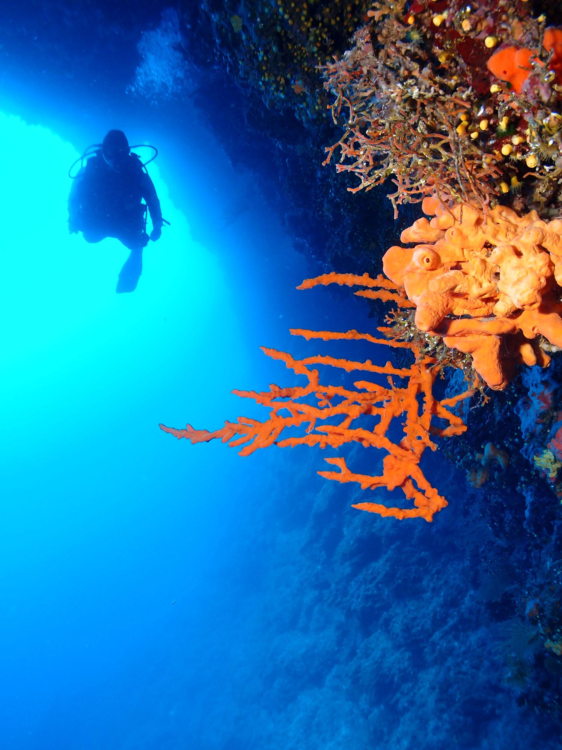 Scuba-diving-in-Split-Slika-4
